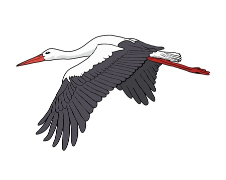 black stork: Flying stork, illustration