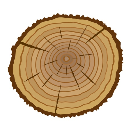 wood cross section: Cross section of tree, illustration
