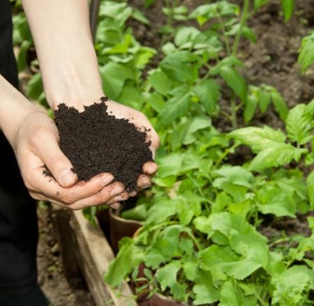 hands with black soil Foto de archivo