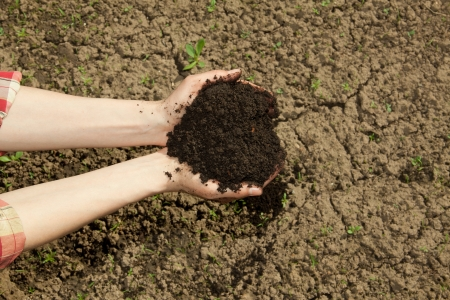 hands with black soil photo
