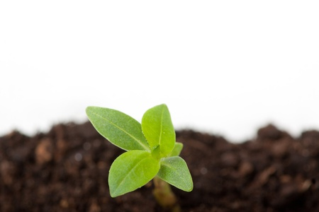 Young plant sprout on the soil, isolated on white background photo