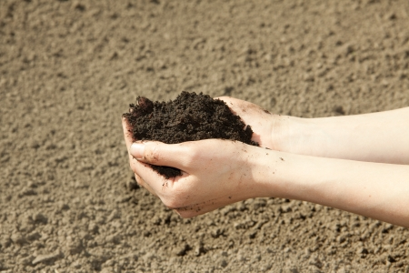 earth handful: hands with black soil Stock Photo