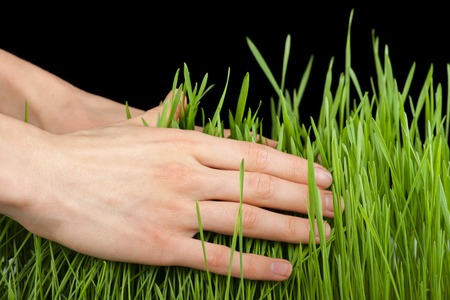 Hand above green fresh grass. On black background. photo