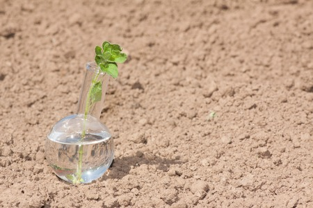 desertification: flask with clear water and green plant on dry soil