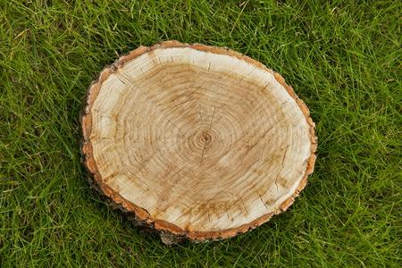 tree stump on the green grass, top view Stockfoto