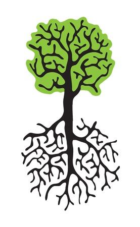 grünen Baum mit Wurzeln isoliert auf weißem Hintergrund Illustration