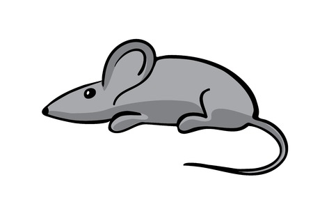 gray mouse, vector illustration, isolated on white Vector