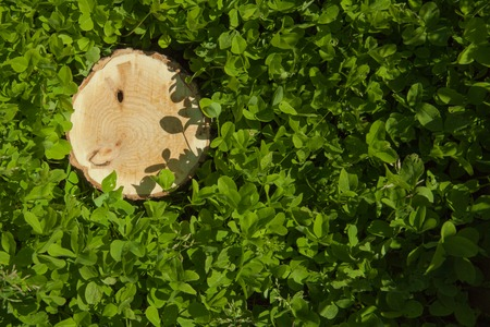 tree stump on the green grass, top view photo