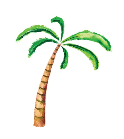 Palm tree, isolated watercolour vector illustration Vector