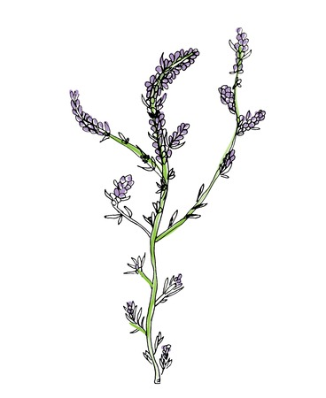 phytology: green branch of plant with violet flowers, vector illustration