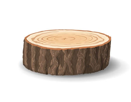 tree cross section: Cross section of tree stump, vector illustration, isolated on white background