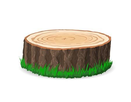 cross section of tree: Cross section of tree stump, vector illustration, isolated on white background