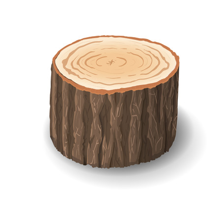 Cross section of tree stump, vector illustration, isolated on white background