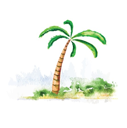watercolour: Palm tree, isolated watercolour vector illustration Illustration