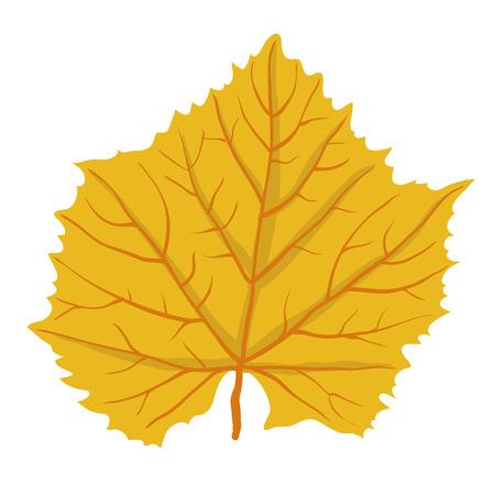 leafage: Autumn leaf of tree, isolated on white, vector illustration