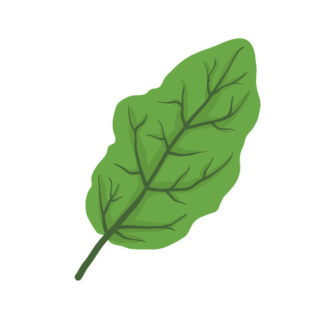 tree isolated: Hoja verde de �rbol, aislado en blanco, ilustraci�n vectorial