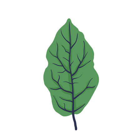leafage: Green leaf of tree, isolated on white, vector illustration