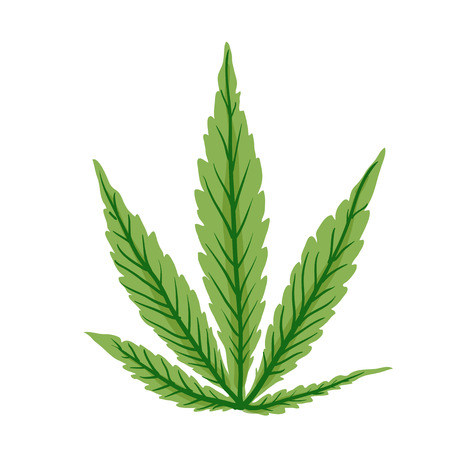indica: Cannabis leaf, isolated on white background,  vector illustration