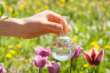 fertilizer: tulips and bulb with liquid fertilizer or water
