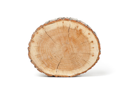 Cross section of tree trunk, isolated on white background Imagens - 42791578