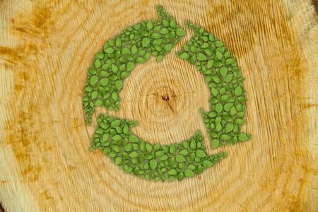 tree cross section: Cross section of tree trunk with green plant sprout recycle symbol