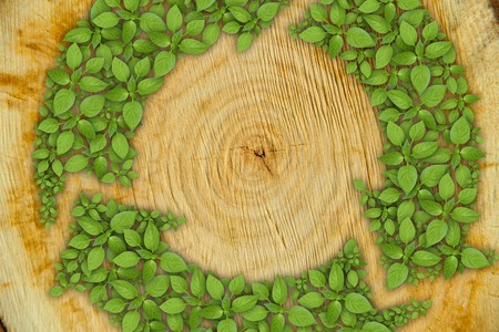 cross section of tree: Cross section of tree trunk with green plant sprout recycle symbol