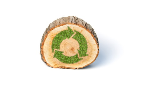 tree cross section: Cross section of tree trunk with recycle symbol, isolated on white background Stock Photo