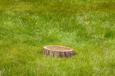 lumbering: tree stump on the green grass