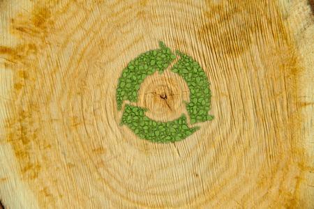 raccolta differenziata: Sezione di tronco d'albero con la pianta simbolo verde germoglio di riciclo Archivio Fotografico