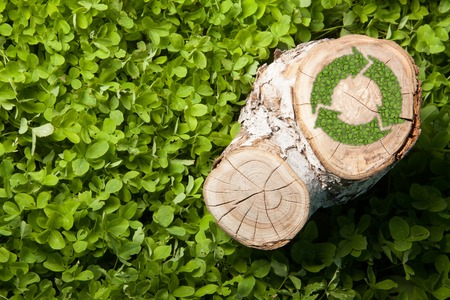 lumbering: tree stump on the green grass with recycle symbol, top view Stock Photo