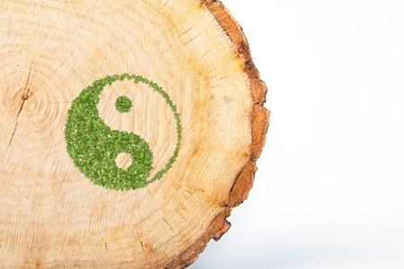 cross section of tree: Cross section of tree trunk with Ying yang symbol of harmony and balance. Isolated on white background