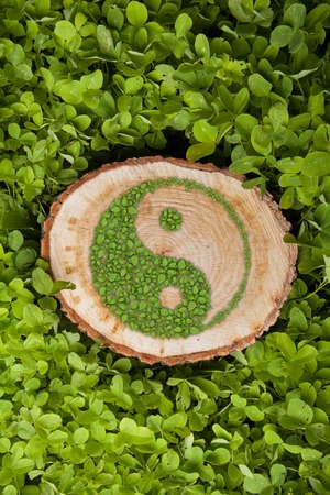 Tree stump on the grass with green ying yang symbol.