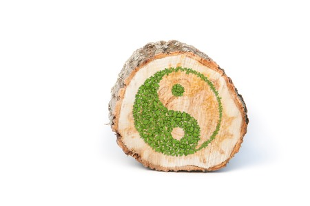 tree cross section: Cross section of tree trunk with Ying yang symbol of harmony and balance. Isolated on white background
