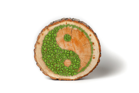 daoism: Cross section of tree trunk with Ying yang symbol of harmony and balance. Isolated on white background