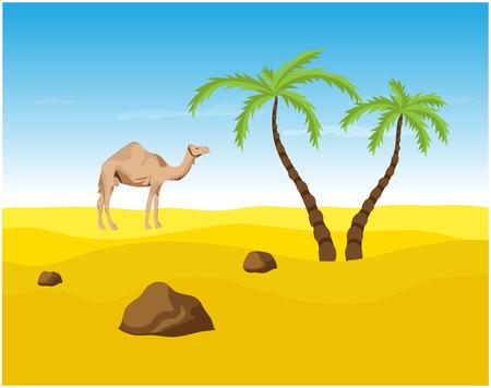 desert oasis: Camel and palms in the Desert, oasis illustration.