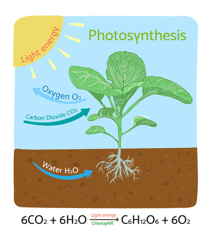 Photosynthesis diagram. Schematic illustration of the photosynthesis process. Stock Illustratie