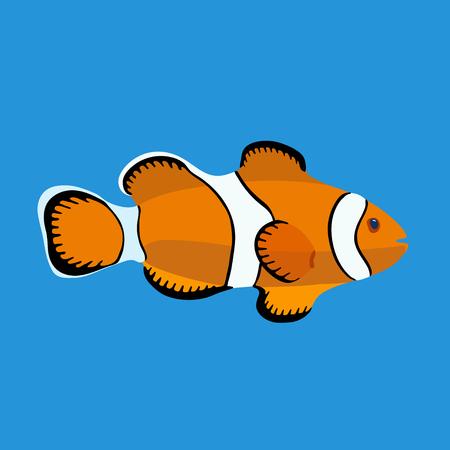 clown fish: Ocean clown fish, vector illustration, isolated on blue background. Illustration