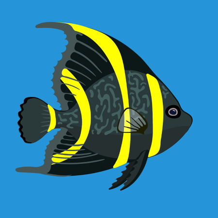 angel fish: Tropical ocean angel fish. Vector illustration, isolated on blue background. Illustration