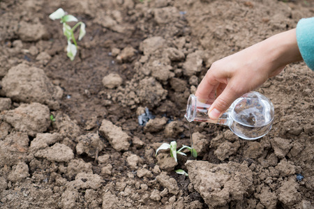 scientific farming: Female hand with a test tube and plant. Fertilizer in laboratory glassware.