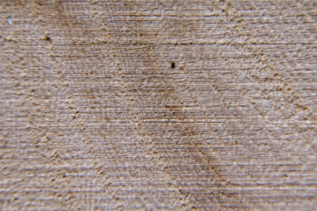 Wood texture, wood background. Tree cut close-up, macro.