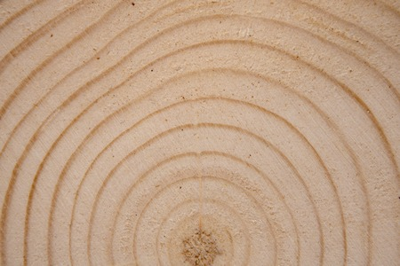 Pine tree trunk cross-section with annual rings. Lumber piece close-up.