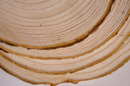 Piled pine tree trunk cross-sections with annual rings. Lumber piece close-up.