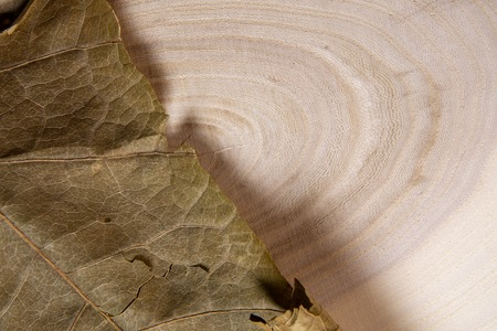 Dry leaf on wooden background macro shot. Wood annual rings and dry leaf close-up. 版權商用圖片
