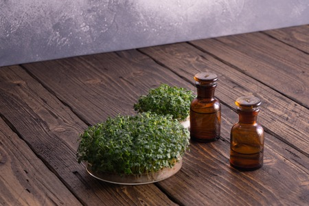 Microgreens in round container and small glass vials on wooden table. Sprouts, microgreens, healthy eating concept. Science, biology. Stok Fotoğraf - 121631965