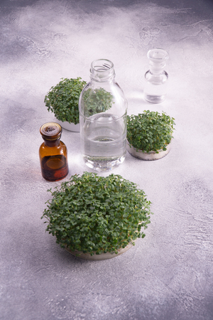 Microgreens in round containers and glass vials on bright textured surface. Sprouts, microgreens, healthy eating concept. Science, biology.