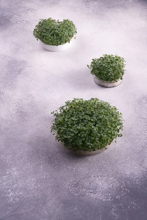 Microgreens in three round containers on bright textured surface. Sprouts, microgreens, healthy eating concept. Science, biology.