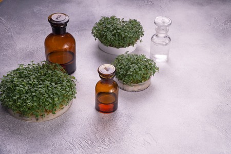 Microgreens in round containers and glass vials on bright textured surface. Sprouts, microgreens, healthy eating concept. Science, biology. Banco de Imagens - 122602018