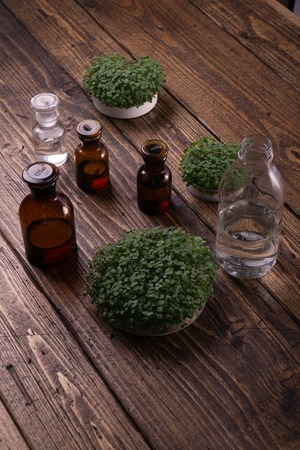 Microgreens in round container and small glass vials on wooden table. Sprouts, microgreens, healthy eating concept. Science, biology. Reklamní fotografie