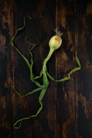 Organic onion with leaves on rustic wooden table. Food background. Bulb onions, green spring. Top view.