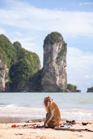 Funny macaque monkey sitting on a tropical beach.